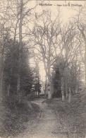 Houffalize - Sous-Bois à L'Hermitage, 1906 - Houffalize