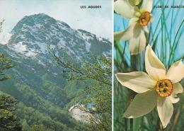 "España--Barcelona--1977--Montseny --Les Agudes--""Flor De Narcis""- - Flores"