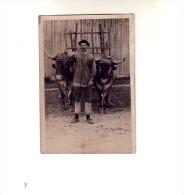 CARTE PHOTO        ATTELLAGE DE BOEUFS         PAYS BASQUE LIEU INCONNU - France