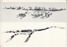 Vertébrés Fossiles: Squelette De PLESIOSAURE.  (986) - Animaux & Faune