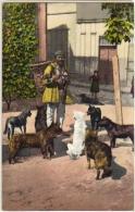 TURKEY - CONSTANTINOPLE - LES CHIENS DE RUE - 19120s POSTCARD - Turquie