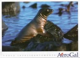Lote PEP2,  Ecuador, Postal, AeroGal, Galapagos, Lobo Marino, Postcard - Ecuador