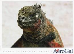 Lote PEP6,  Ecuador, Postal, AeroGal, Galapagos, Iguana, Postcard - Ecuador