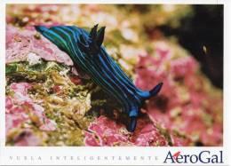 Lote PEP5,  Ecuador, Postal, AeroGal, Galapagos, Fondo Marino, Postcard - Ecuador