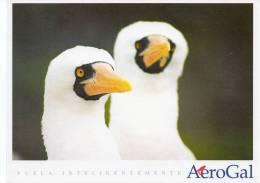 Lote PEP7,  Ecuador, Postal, AeroGal, Galapagos, Ave, Bird, Postcard - Ecuador