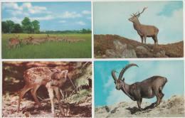 7 POSTCARDS:   DEER, BAMBI, ANTELOPE , RENDEER, ALPINE IBEX -  Animals/Dieren/Tiere/Animaux (3 Scans) - Postkaarten