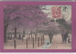CHERRY BLOSSOMS UYENO PARK , TOKYO - Tokyo