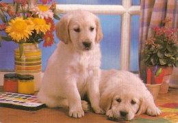CALENDARIO DEL AÑO 2001 DE UNOS PERROS (CALENDRIER-CALENDAR) PERRO-CAN-DOG - Calendarios