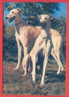 K68 / 1993 - ANIMALS Dog Chiens Hunde Cani Honden Perros  -  Calendar Calendrier Kalender - Bulgaria Bulgarie - Calendarios