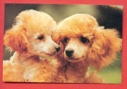 K76 / 1991 - ANIMALS  Dog Chiens Hunde Cani Honden Perros  - Calendar Calendrier Kalender - Bulgaria Bulgarie Bulgarien - Calendarios