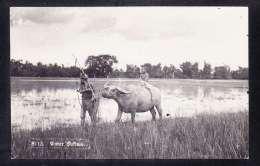 IDN-73 WATER BUFFALO - Indonesia