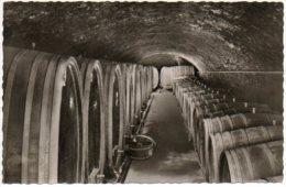 Mayschoss Ahr Wijnkelder Caves Wine Cellar  Wijn Vin Wine Wein Keller - Vignes