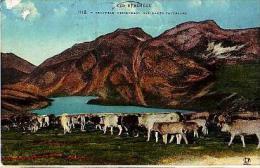 Divers   1181            Troupaeu Descendant Des Hauts Pâturages   . - Autres Communes
