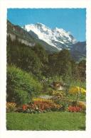 Cp, Suisse, Wengen, Bilck Auf Die Jungfrau - BE Berne