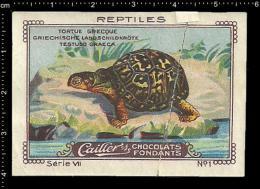 Old Original Swiss Poster Stamp (cinderella, Label) Nestle - Amphisbaena Reptiles Turtles Schildkröten Tortues - Turtles