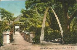 GIBRALTAR  ALAMEDA  GARDENS  - WHALE JAW'S  ARCH - Gibraltar