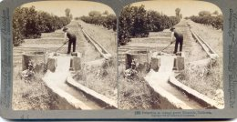Vue Stereoscopique -  Underwood - Californie - Irrigation D'une Orangeraie - Visionneuses Stéréoscopiques