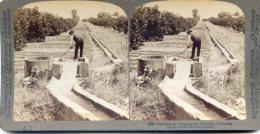 Vue Stereoscopique -  Underwood - Californie - Irrigation D'une Orangeraie - Stereoscopes - Side-by-side Viewers