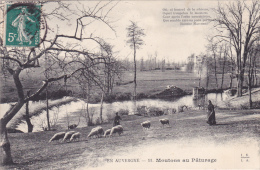 CPA 15 @ Série En Auvergne @ Moutons Au Pâturage Vallée De La Jordane @ Poême De Marcenac - Rivière - France