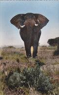 Afrique - Congo Belge - Zaire - Eléphant - Cachet Bukavu Affranchissement - Congo Belge - Autres