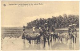 Pk281: Nels Missiën Der Paters Oblaten Op Het Eiland Ceylon  Aan Het Werk In Het Rijstveld - Sri Lanka (Ceylon)