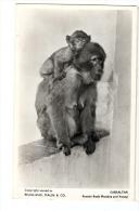 1940-50s? Gibraltar Rock Monkeys 4 X RP Ppcs Unused - Gibraltar