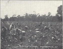 THOMASVILLE - GEORGIE - ETATS UNIS - Cotton Picking - CPA DOS SIMPLE INTROUVABLE - 111013 - - Etats-Unis