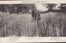 AGRICULTURE .... EFFETS DE LA CIANAMIDE SUR BLE ... MAVILLY MANDELOT - Cultures