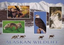 Alaska The Wildlife - Etats-Unis
