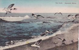 Maine Ogunquit Sea Gulls Albertype