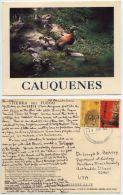 Argentina 2000 Postcard Cauquenes - Ashy-Headed Goose, Ushuaia Postmark - Uccelli