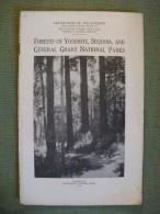 Forests Of Yosemite Sequoia General Grant National Parks 1920 Usa Arbres Nature - Amérique Du Nord