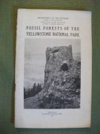 Fossil Forests Of The Yellowstone  National Parks 1920 Usa Arbre Nature Amérique - Amérique Du Nord