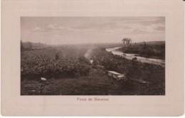 Banana Farm Plantation, Finca De Bananos Costa Rica On C1900s/10s Vintage Postcard - Costa Rica