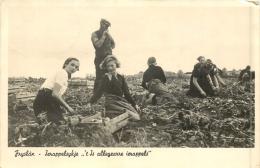 FRYSLAN IERAPPELSYKJE ALLEGEARRE IERAPPELS - Nederland