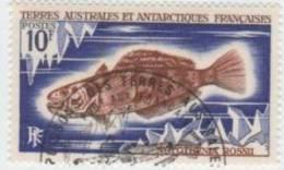 TAAF N° 35 YVERT  POISSONS  DIVERS - Terre Australi E Antartiche Francesi (TAAF)
