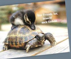 (445) Tortoise - Tortue - Turtle + Duckling - Tartarughe