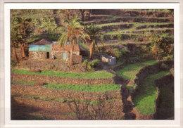 La Gomera , Casa Vieja En Las Rosas - Gomera