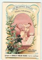 Les Plantes Utiles, Plantes Industrielles : L'Olivier. Savon. 2 Scans. Chocolat Poulain - Poulain