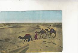 Sahara  Dans Le Grand Désert - Algeria