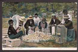 BM6) Bermuda - Packing Bermuda Onions - Bermudes