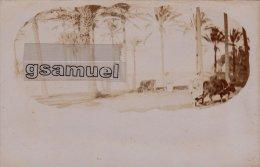 Afrique - Carte Photo - Libye - TRIPOLITANIA - Souvenir De Tripoli De Barbarie . - (voir Scan). - Libya