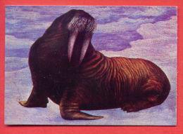 K569 / 1979 ANIMALS - Morse Walross The Walrus (Odobenus Rosmarus) -  Calendar Calendrier Kalender  Bulgaria - Calendarios