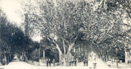 Bollene - Avenue De La Palud; Avenue Carnot - Bollene