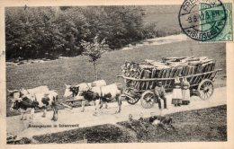 Allemagne, Ochsengespann In Schwarzwald - Allemagne