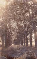 Overpelt. -  Zeldzame Fotokaart;  1908  Het Hobos - Overpelt