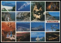 S8484 GIBRALTAR VIEWS MONKEY VG - Gibilterra