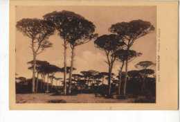 Ravenna Pineta Di Classe - Unclassified