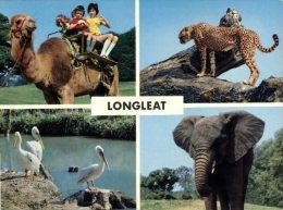 (260) Longleat Zoo - Elephant - Camel - Cheetah - Animales