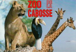 14 - JURQUES. - ZOO De La CABOSSE. - Carte Publicitaire Photo Roger Puillandre. - France
